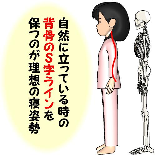 背骨のS字ラインを保つ